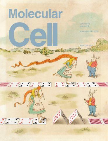 新規なクロマチン構造 (H3K9me3/H3K4) ビバレントクロマチン)の発見。脂肪組織中の、前駆脂肪細胞が脂肪細胞にならないようにとどめている仕組みを解明しました。Molecular Cell
