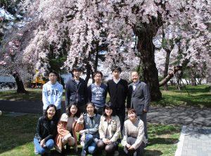 桜の下にて 2